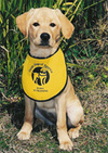 Gift_planning_dog